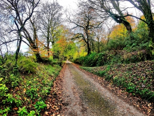 Road from Saddell Abbey to Saddell Castle