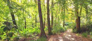 Tree view at Achamore Gardens